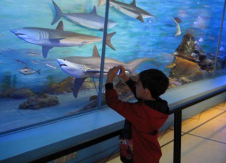 Mais fotos das réplicas de tubarões...