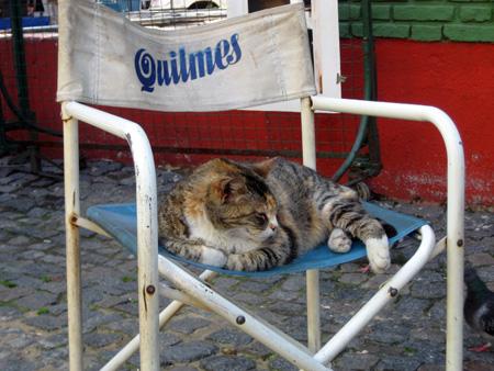 Perturbar a soneca do gato...