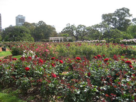 Campo de flores...