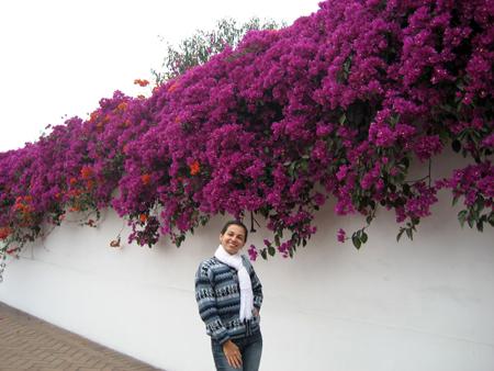 Não são lindas essas flores?