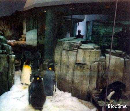 05. Biodôme - pingüins
