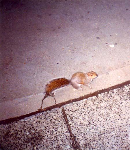 06. Esquilo