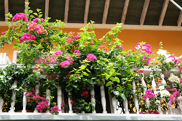 Flores e mais flores...