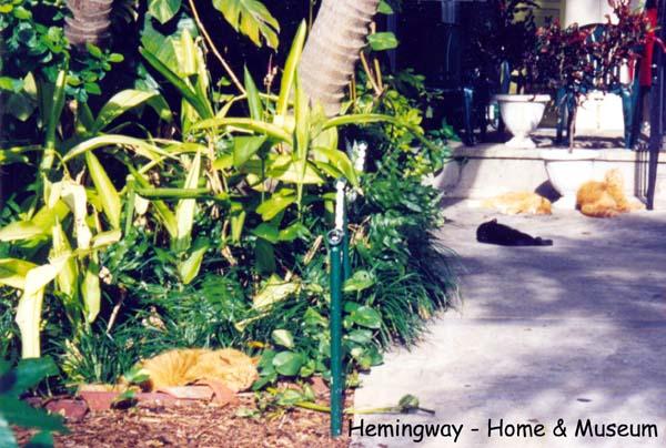 12. Hemingway - gatos